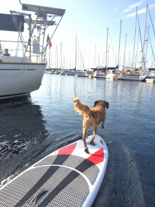 Sasha diving for the ball from the paddle board