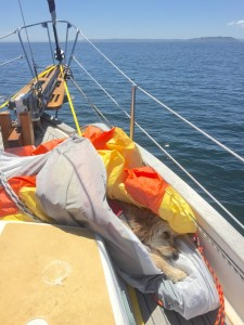 Sasha sleeping in the spinnaker