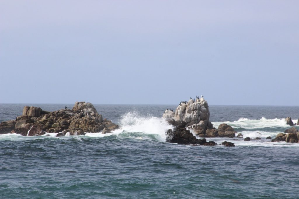 Point Pinos in Monterey